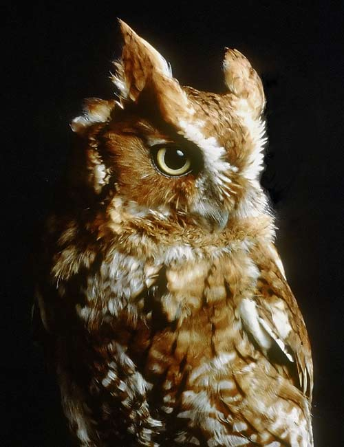I fall in love with owl..