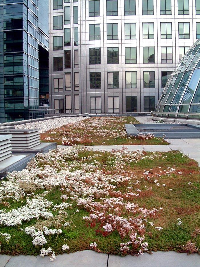 Urban Habitats Rare Invertebrates Colonizing Green